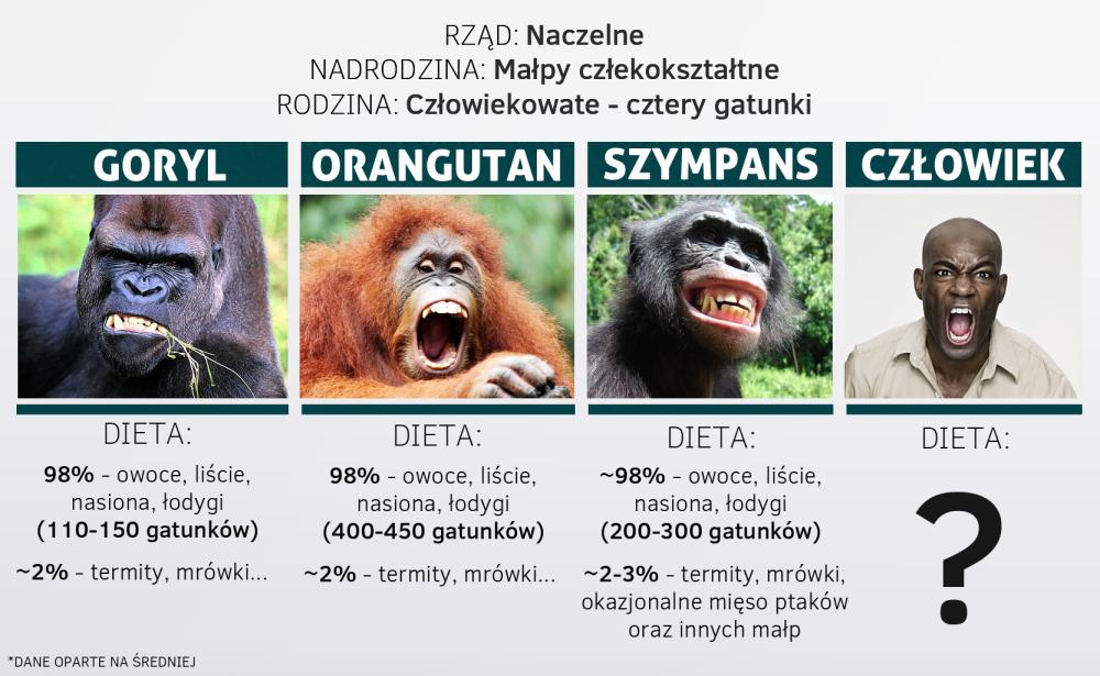 szympans2